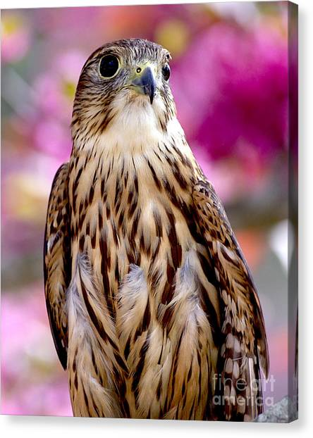Feathered Wizard Canvas Print