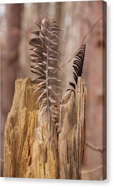 Feathers And A Stump. Casey Park, Ontario, Ny Canvas Print