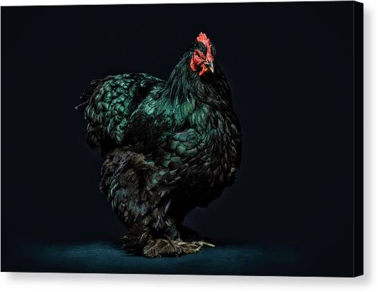 Chicken Farms Canvas Print - Feathers by Pixabay