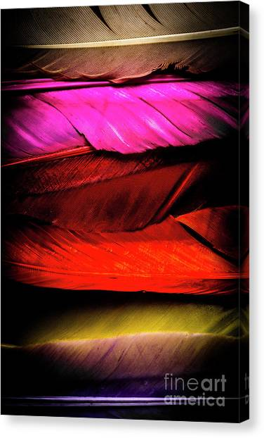 Multi Canvas Print - Feathers Of Rainbow Color by Jorgo Photography - Wall Art Gallery