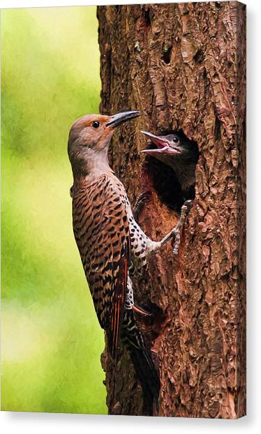 Northern Flicker Canvas Print - Feed Me Digital Painting by Sharon Talson