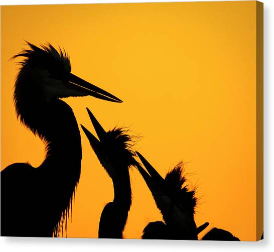 Delray Canvas Print - Feed Me by Mike Lang
