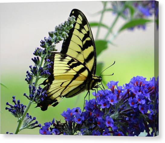 Feeding From A Nectar Plant Canvas Print