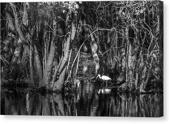 Ibis Canvas Print - Feeding Time by Marvin Spates