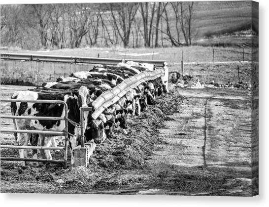 Feedlot Canvas Print