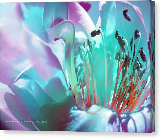 Feliz Verano Canvas Print