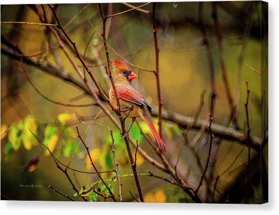 Female Cardinal #1 Canvas Print