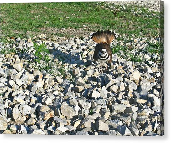 Killdeer Canvas Print - Female Killdeer Protecting Nest by Douglas Barnett