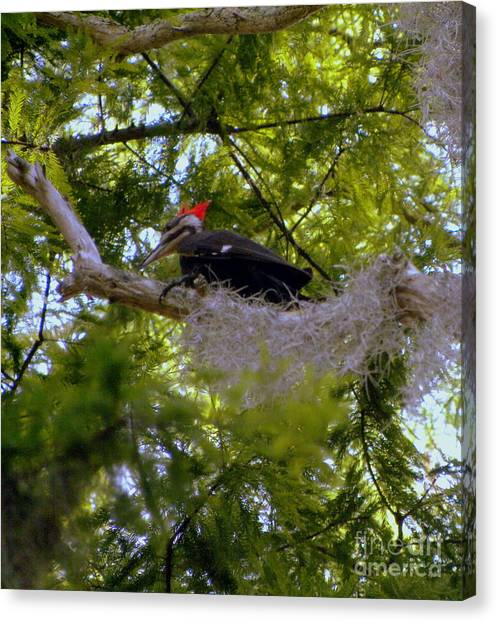 Female Pileated Woodpecker Canvas Print by Terri Mills