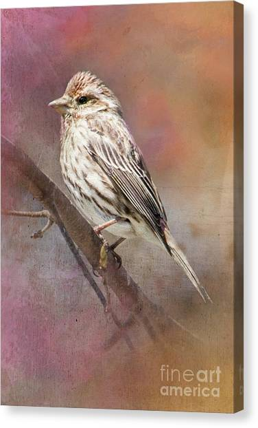 Female Sparrow On Branch Ginkelmier Inspired Canvas Print