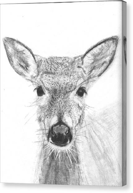 Female White-tailed Deer Canvas Print by Marqueta Graham