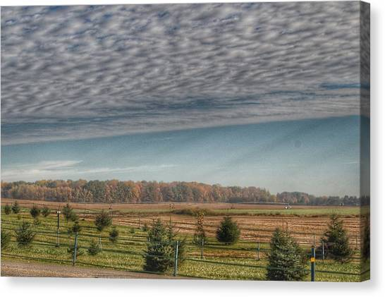 9017 - Fences, Firs And Fall Canvas Print
