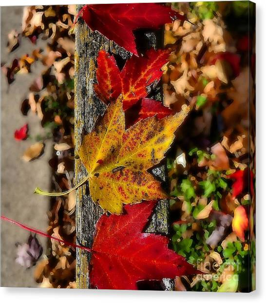 Red Camo Canvas Print - Fencing Leaves by Wendy Johnson