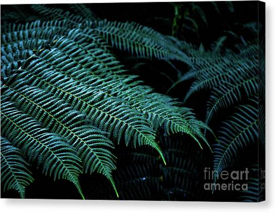 Patterns Of Nature 6 Canvas Print
