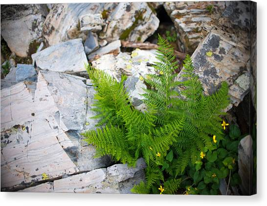 Fern Among Glacial Rock Canvas Print