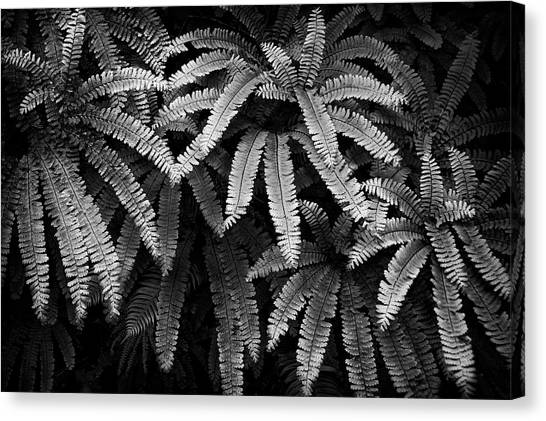 Fern And Shadow Canvas Print