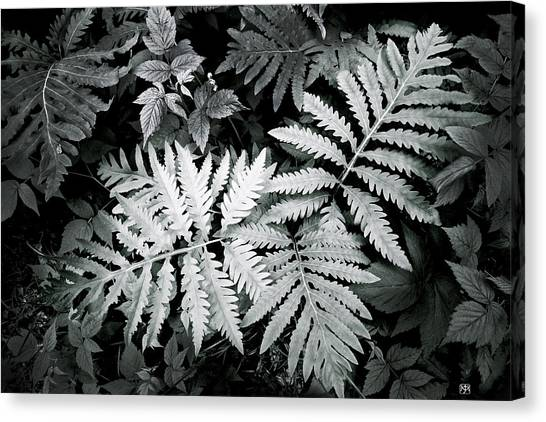 Fern At Bald Rock Canvas Print