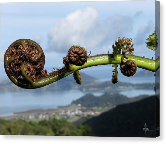 Fern Fiddlehead Canvas Print