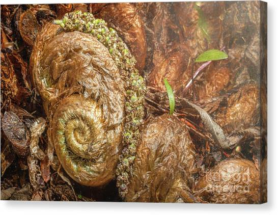 Fern Headdress Canvas Print