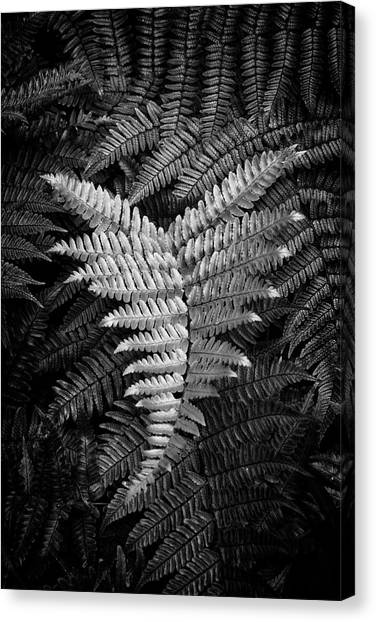Fern In Black And White Canvas Print