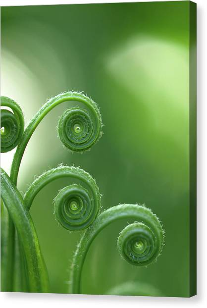 Plants Canvas Print - Fern In Forest by © Machel Spence