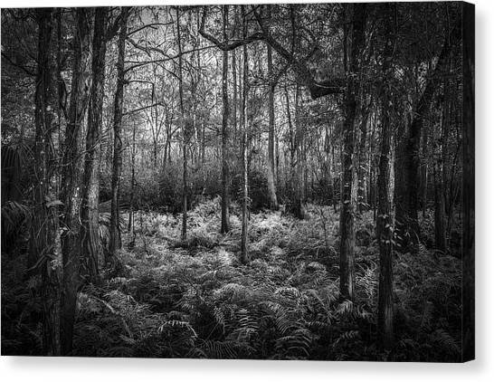 Inland Canvas Print - Fern Lace B/w by Marvin Spates