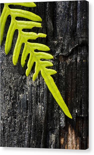 Fern On Burnt Log Canvas Print