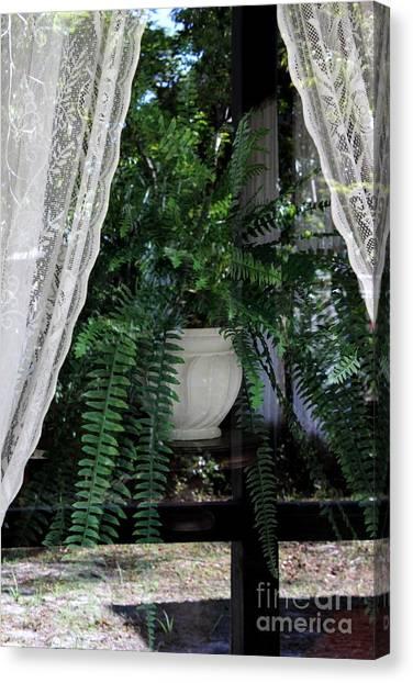 Fern Through A Window Canvas Print
