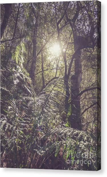 Jungles Canvas Print - Ferns And Sunshine by Jorgo Photography - Wall Art Gallery