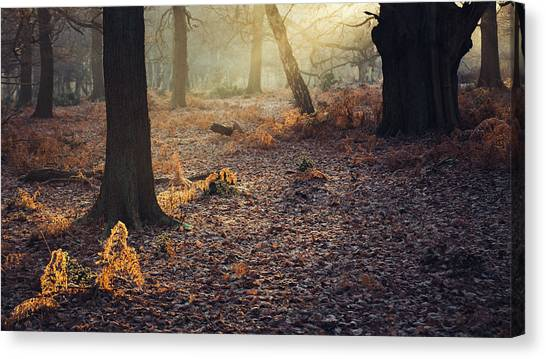 Sherwood Forest Canvas Print - Ferns by Chris Dale