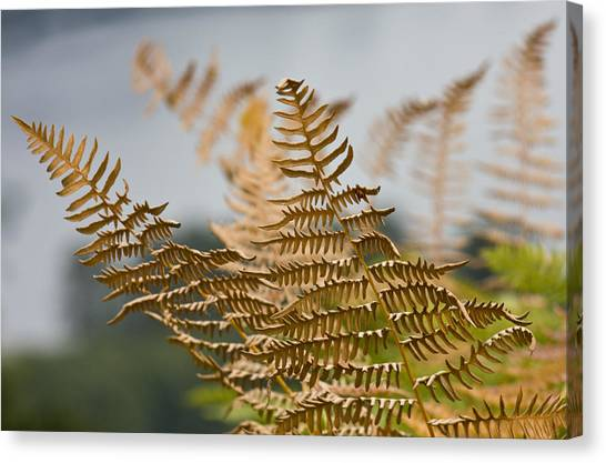 Ferns Growing By The River Canvas Print by Barbara  White