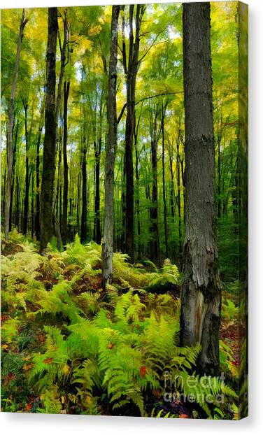 Ferns In The Forest - West Virginia Canvas Print