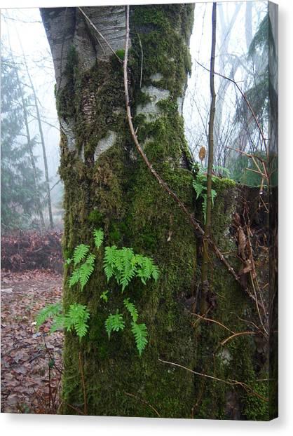Ferns On A Foggy Day Canvas Print by Ken Day