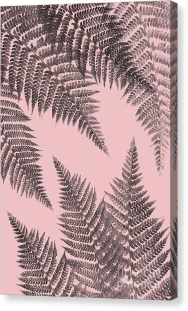 Ferns On Blush Canvas Print