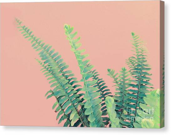 Ferns On Pink Canvas Print