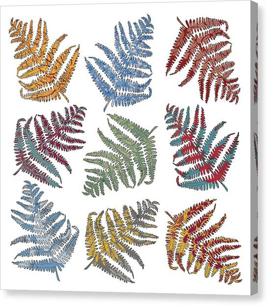 Selection Canvas Print - Ferns by Sarah Hough