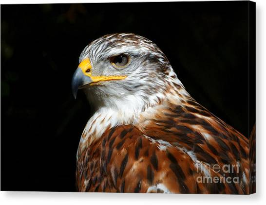 Ferruginous Hawk Portrait Canvas Print