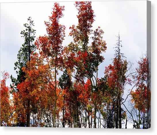Festive Fall Canvas Print