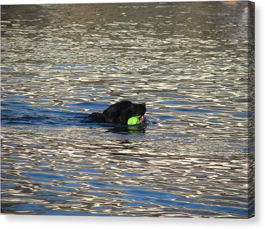 Fetch  Swimming 2 Canvas Print by Hasani Blue