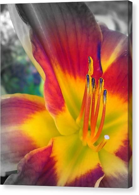 Feverishly Hot Lily Canvas Print by Cynthia Daniel