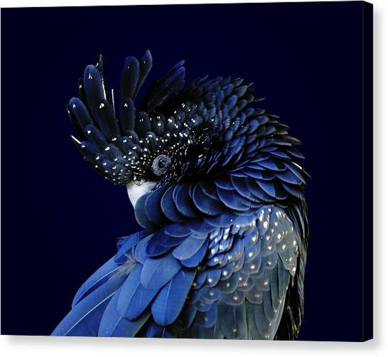 Fibonacci Cockatoo Canvas Print