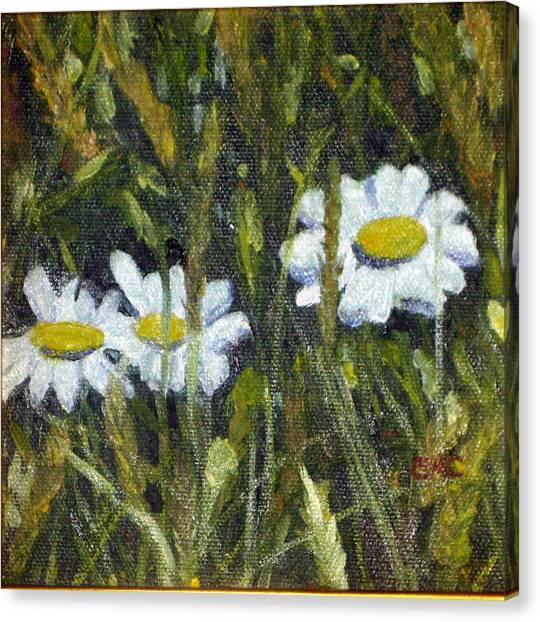 Field Daisies Canvas Print by Susan Coffin