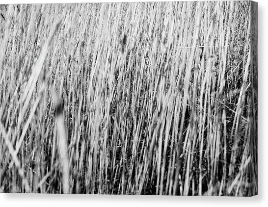 Field Grasses Canvas Print