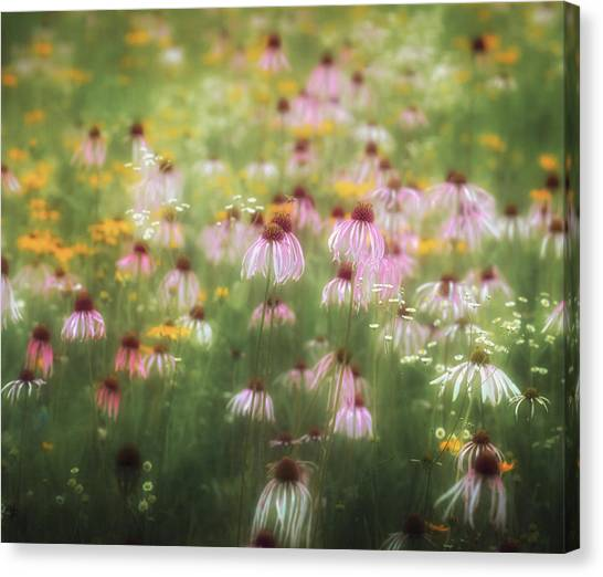 Field Of Coneflowers 5x6 Canvas Print
