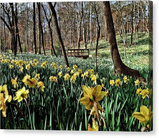 Canvas Print - Field Of Daffodils by Elijah Knight
