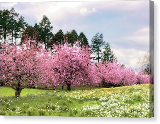Tree Blossoms Canvas Print - Field Of Dreams by Jessica Jenney
