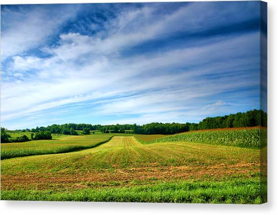 Field Of Dreams Two Canvas Print