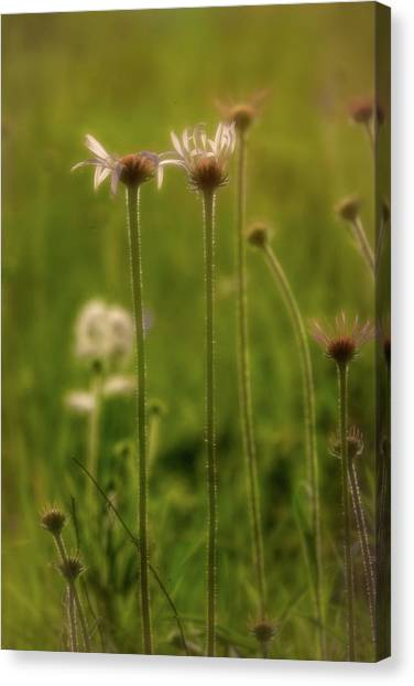 Field Of Flowers 3 Canvas Print
