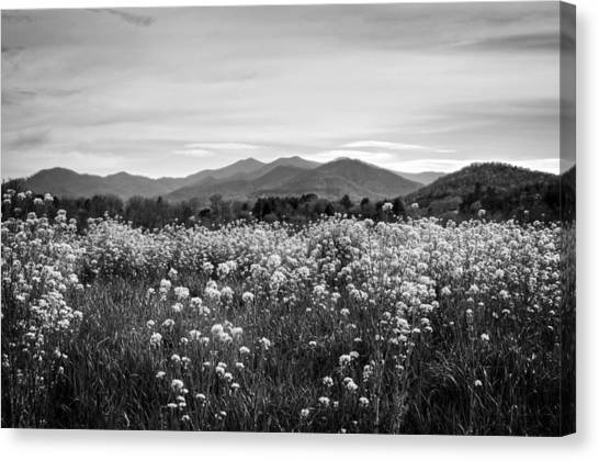 Field Of Flowers In Black And White Canvas Print