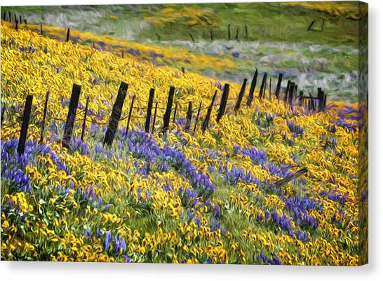 Field Of Gold And Purple Canvas Print